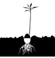 Avocado plant-tree vector image vector image