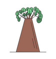 baobab tree on white background vector image vector image