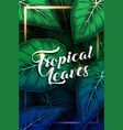 exotic pattern with tropical leaves background vector image vector image