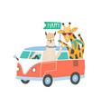 llama and giraffe in minivan flat vector image vector image