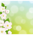 Pastel Apple Tree Flowers Frame vector image vector image