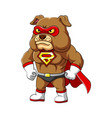super bulldog with serious and angry face and vector image
