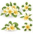 white and yellow plumeria flower vector image vector image
