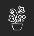 berry shrubs and vines chalk white icon on black vector image