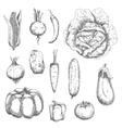 Retro sketches of garden vegetables vector image vector image