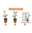 care for flowers at home pruning a flower vector image vector image