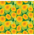 sunflower seamless 2 380 vector image