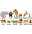 Wild animals in many types vector image