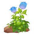 blue tulip flowers and rocks on white background vector image vector image
