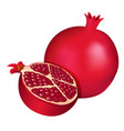dark red half pomegranate and a pomegranate vector image vector image