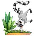 wild lemur vector image vector image