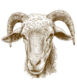 engraving rams head vector image vector image