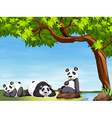 Pandas sitting under the tree vector image vector image