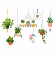 set macrame hangers for plants growing in pots vector image