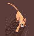 sneaking lioness vector image vector image