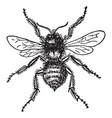 bumblebee vintage vector image vector image