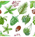 hops seamless pattern on white vector image vector image