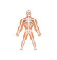 human biological skeletal system anatomy of human vector image vector image