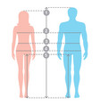 human body measurements and proportions vector image vector image