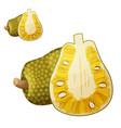 jackfruit cartoon icon vector image vector image