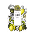 lemon tree frame template hand drawn fruit vector image