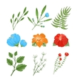 Set of traditional and tropical flowers vector image vector image