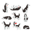 siberian husky character sett dog in different vector image vector image