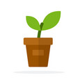 a young plant in a pot flat isolated vector image vector image