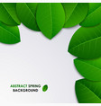 Abstract spring fresh background with green leaves vector image