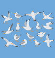 atlantic white seabird fly at sky beach seagull vector image