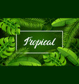 banner with tropical palm leaves exotic tropical vector image vector image