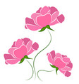 beautiful roses vector image vector image
