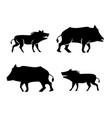 boar icons and symbol in silhouette style vector image vector image