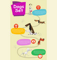 dogs infographics vector image vector image