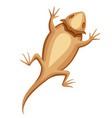 flat bearded dragon small brown lizard central vector image vector image
