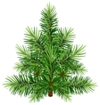 Green Christmas pine tree vector image vector image