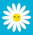 white daisy chamomile with face head cute flower vector image vector image