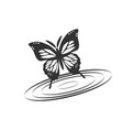 butterfly with water vector image vector image