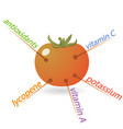 tomato content properties and benefits vector image vector image