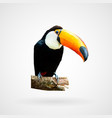colorful polygonal toucan bird vector image