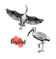 hand drawn ibis skethes birds vintage vector image