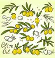 olive brances set vector image vector image