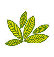 silhouette green leaves with ramifications vector image vector image
