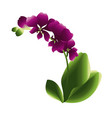 blooming orchid flower gradient vector image vector image