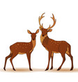 couple deers isolated vector image vector image