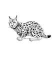 hand drawn lynx vector image vector image