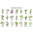 best medicinal herbs for memory focus and brain vector image vector image