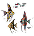 colorful drawing aquarium fishes set vector image vector image