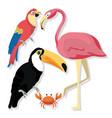 exotic birds cartoons vector image vector image