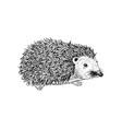 hand drawn hedgehog vector image vector image